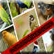 Os últimos sons de pássaros by saudara app