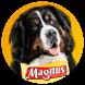 Magnus Pet