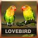 Lovebird Song Collections by Garuda Jogja