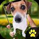 Dog on Screen Simulated - iDog by ideaFun