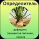 DiNut Сахарная свекла by AgroSoftex