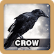 Crow Sound Collections by Juns Project