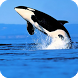 Orca Live Wallpaper by MaxImages