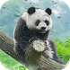 Panda Wallpaper Pro by Herald Featured