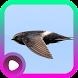 Kicau Burung Walet by LabKicau