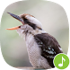 Appp.io - Laughing kookaburra by Appp.io