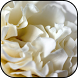 White roses wallpapers by veronikadev
