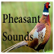 Pheasant Sounds by HD Sounds Inc