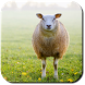 Sheep Wallpapers by LunaDev