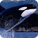 Orca Pack 2 Live Wallpaper by MaxImages