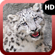 Snow Leopard Wallpaper by MaxImages