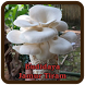 Budidaya Jamur Tiram by E-book App