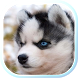 Husky Puppies live wallpaper by SweetMood