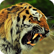 Tiger HD Live Wallpaper by WallpapersLove