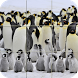 Tile Puzzle - Penguins by Appilo