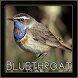Bluethroat Bird Chirping Sounds by penodev