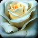 Rose Live Wallpaper by Editor de Fotos