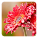 Flower Live Wallpaper by Pro Live Wallpapers
