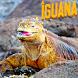 Amazing Iguana Wallpapers by Infotech Developer