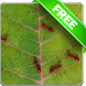 Red ants free live wallpaper by Infomedia BH
