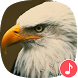 Appp.io - Eagle Sounds