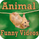 Animal Funny Videos by shreya patil8512