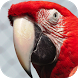 Baby Discover Birds by Hatch Works Ltd