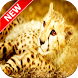 Cheetah Wallpapers by Fresh Wallpapers