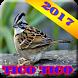 Canto de Tico Tico Novo 2017 by kusumo.app