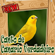 Cantos De Canario Verdadeiro Amazone Brazilio Mp3