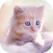 Cute Kitten Live Wallpapers by Thalia Premium Photo Montage