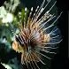 魚類猜謎 by Mr.Quiz