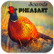 Pheasant Sounds by Apps Dev Inc