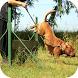 Dog Training Video by Vipulpatel808