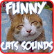 Funny Cats Sounds Ringtones by Softone