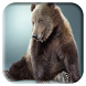 Bear Wallpapers by Sukipli Studio