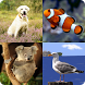 Kids Spelling Quiz - Animals and Birds by kmnathana