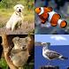 Kids Spelling Quiz - Animals and Birds