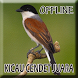 Suara Burung Cendet Gacor by Smanxar Studio