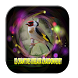 Sonnerie oiseau chardonneret by saudara app