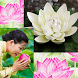 Lotus Collage Photo Editor by Energy Collage