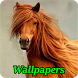 Horses Wallpapers by Infinity