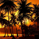 live palm tree wallpaper by amazing live wallpaper llc