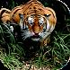 Wild Tiger Target Attack by RockyHill Studios