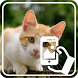 Photos of Kittens by Addictive Free Apps