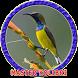 Master Kolibri Ninja