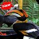 Hornbill bird by Seaweedsoft