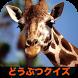 おもしろ!どうぶつクイズ 爆笑!珍プレー!動物が面白い!子供 by App pocket.