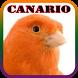 Canário Verdadeiro HD 2017 by kusumo.app