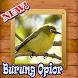 Ocehan Burung Opior Terbaru by Natal Publisher
